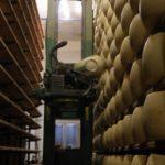 パルマ郊外でチーズの王様工場見学