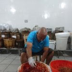 カラブリア州特産食材・ローザマリーナ作り、始まっていますよ~