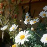 ワイナリーご案内で感じる、カラブリアの春